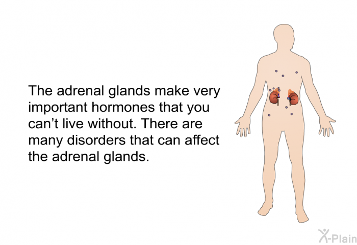 The adrenal glands make very important hormones that you can't live without. There are many disorders that can affect the adrenal glands.